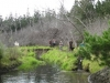 walking-back-along-the-river