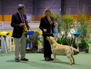 Intermediate in Show