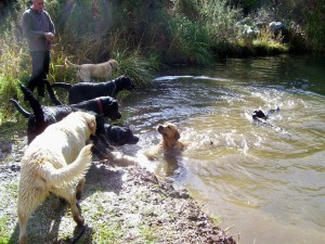Lab walk Whitford27Jul2014