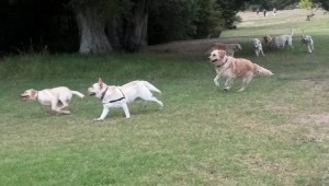 Labs leading the chase