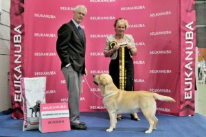 Best Intermediate
