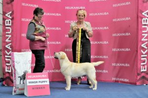 Best Minor Puppy