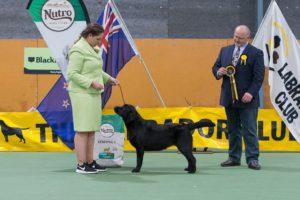 Puppy in Show